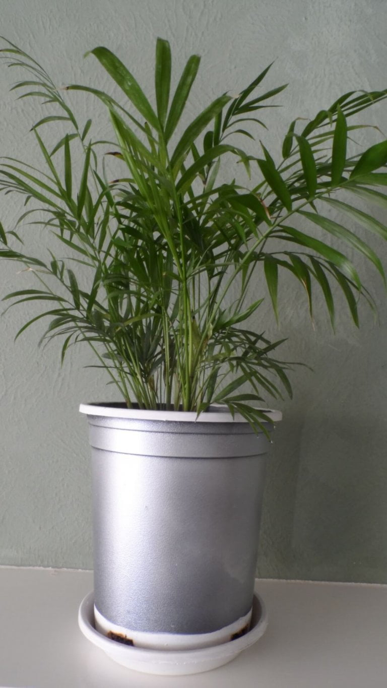 Make A Custom Planter You and Your Budget will Love