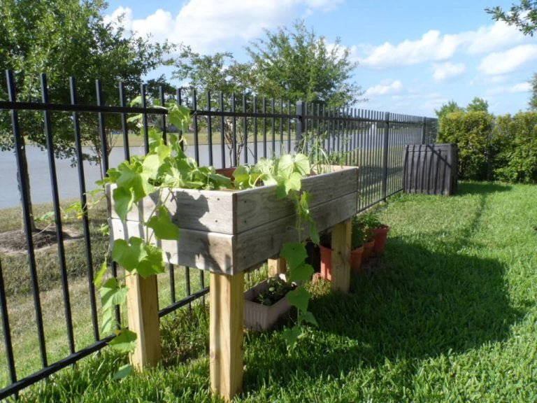 Lessons Learned from the Summer Garden